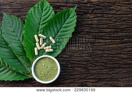 Mitragyna Speciosa Or Kratom Leaves With Medicinal Products In Capsules And Powder In White Ceramic