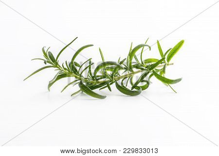 Rosemary. Twig Of Rosemary Isolated On White