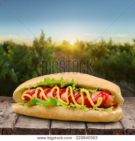 Mustard Dog Hot Ketchup Fast Food Table Food