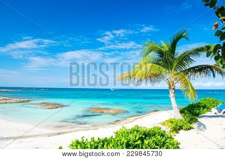Palm Tree, Blue Sea, Sky In Great Stirrup Cay, Bahamas. Tropical Beach With White Sand And Turquoise