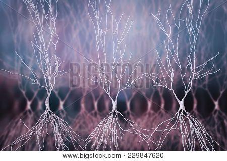 Human Hippocampus Neurons, Computer Reconstruction