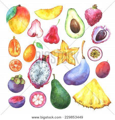 Hand Painted Exotic Fruits Set. Watercolor Collection Of Mango, Pineapple, Carambola, Avocado, Pitay