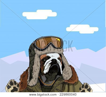 The Image Of A Bulldog In Winter Clothes Against The Backdrop Of Beautiful Mountain Scenery. Great F
