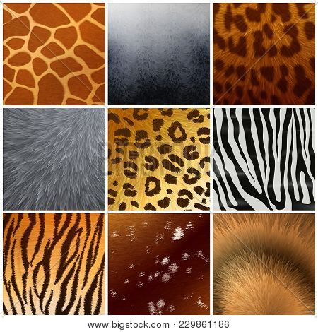Real And Faux Exotic Fur Skin Hide Texture Color Pattern 9 Realistic Samples Collection Isolated Vec
