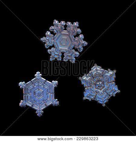 Three Snowflakes Isolated On Black Background. Macro Photo Of Real Snow Crystals: Elegant Star Plate