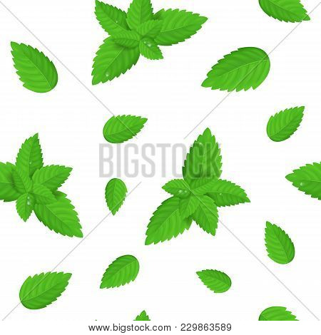 Realistic Detailed Fresh Green Mint Or Spearmint Leaves Seamless Pattern Background Aroma Spice Heal