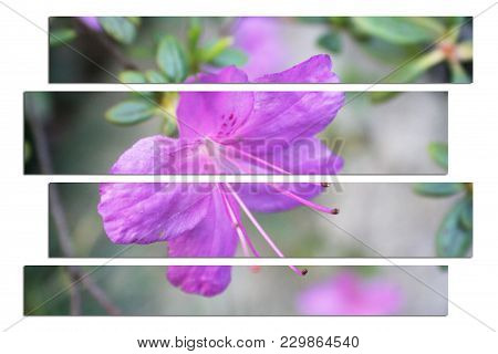 Gorgeous Violet Flower Art High Quality Stock Photo