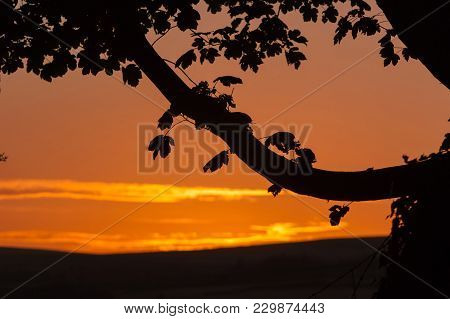 A  Tree Branch And Leaves Silhouetted Against A Red Sky At Sunset