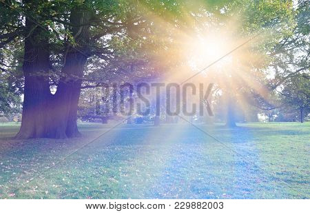Stunning Sunlight Beaming Through Trees - Parkland With Trees In The Background A Large Double Trunk
