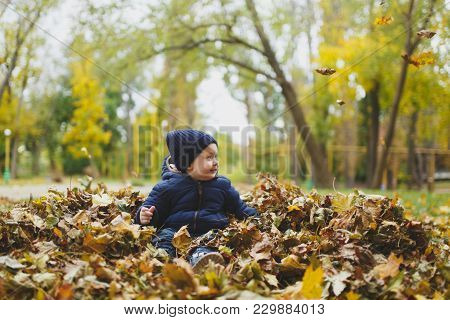 Little Cute Child Baby Boy Walk In Fall Park, Sitting In Pile Of Leaves, Toss Throw Up Dry Yellow Au