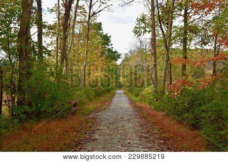 Scenic Rail-to-trail Bike Path Through A Western Pennsylvania Woods In Autumn