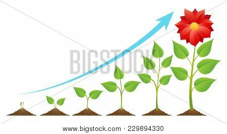 Seedling And Growing. Planting Timeline Or Growing Stages Cycle, Green Sprout On Ground Vector Illus