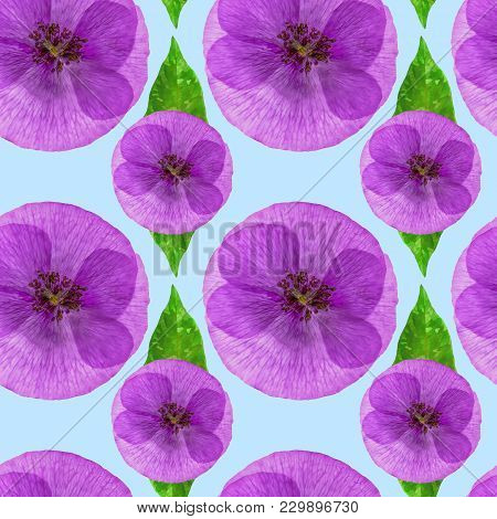 Poppy. Texture Of Flowers. Seamless Pattern For Continuous Replicate. Floral Background, Photo Colla