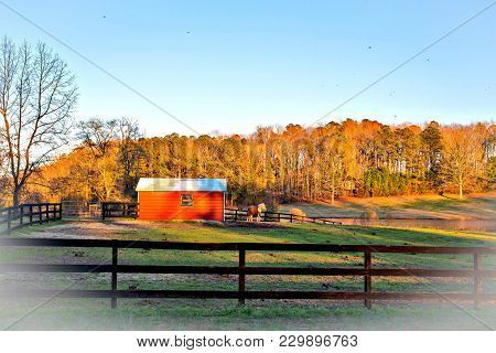 A little horse standing in a pasture by a red shadowy barn at sundown.