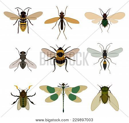 Bug Icon Set Isolated On White Background Illustration. Wasp, Dragonfly, Fly, Bee, Mosquito, Bumbleb