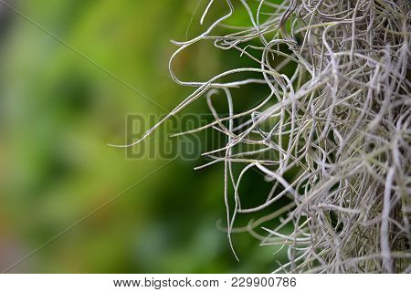 White Fibers Against A Blurred Green Background. Background Concept