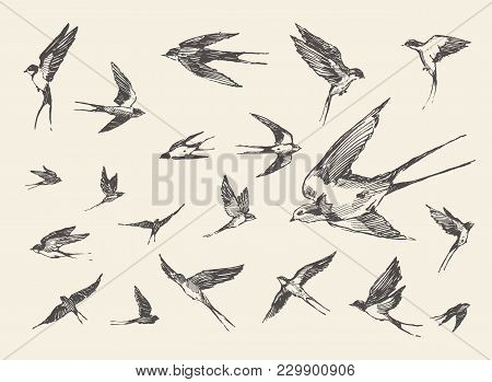 A Flock Of Birds, Flying Swallows, Hand Drawn Vector Illustration, Sketch