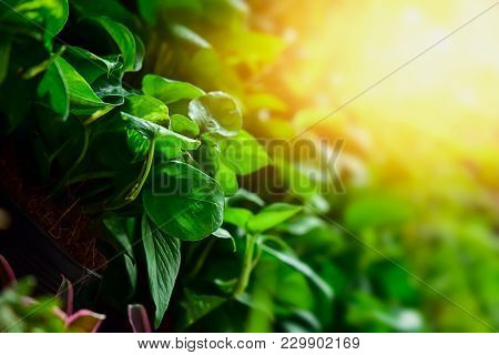The Growth Of Green Leaves That Use Solar Energy As A Food For Growth. Concept Of Growth
