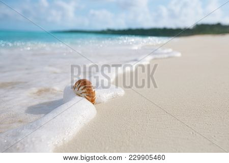 nautilus sea shell against stormy waves on sunny beach , live action