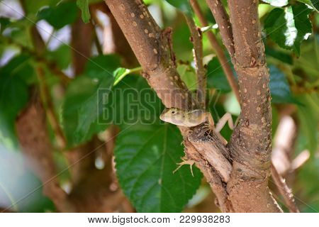 Chameleon, Small Animal, Caught On A Branch, She Looks At You With Suspicion.