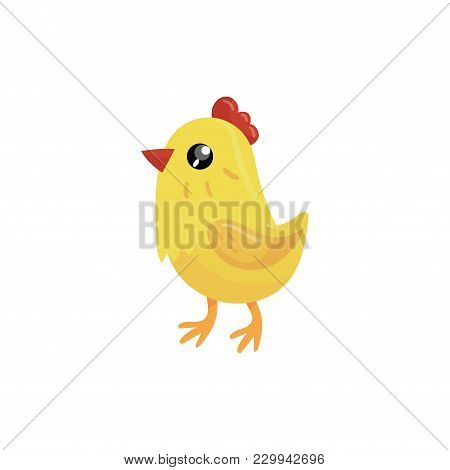 Little Yellow Chicken With Red Beak And Scallop. Cartoon Character Of Farm Bird. Domestic Animal. Co