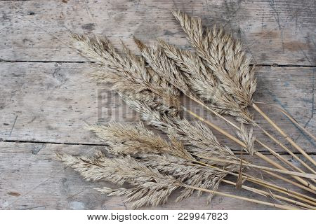 Dry Bulbous Reeds On A Wooden Board
