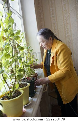 Elderly Woman At The Window With Flowers, Active Ageing