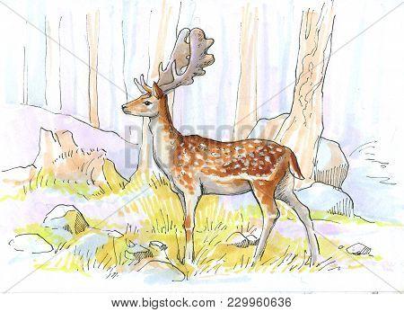 A Deer In A Light Forest. Sketch