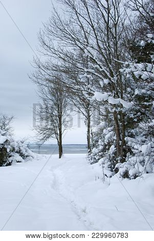 Coastal View Of A Winter Landscape With Snowcapped Trees