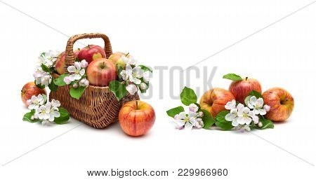 Apples And Apple-tree Flowers In A Basket On A White Background. Horizontal Photo.