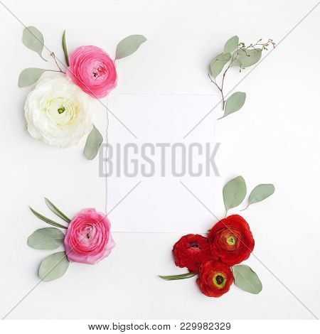 Pink And Red Ranunculus And Green Leaves On White Background. Flat Lay.