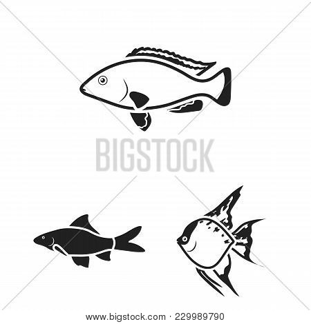 Different Types Of Fish Black Icons In Set Collection For Design. Marine And Aquarium Fish Vector Sy