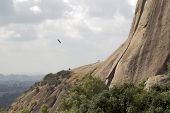 An eagle flying beside a sheer rocky cliff with cloud covered sky in the background poster