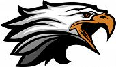 Eagle Head Vector Graphic Team Mascot Image poster