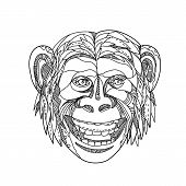 Doodle art illustration of head of a chimpanzee, or a chimpanzee/human hybrid or an early human with traits of apes and humans, smiling done in black and white mandala style. poster