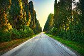 Bolgheri famous cypresses trees straight boulevard landscape. Maremma landmark, Tuscany, Italy, Europe. poster