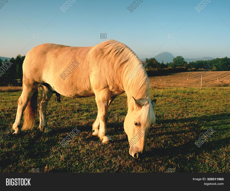 White Horse On Image Photo Free Trial Bigstock