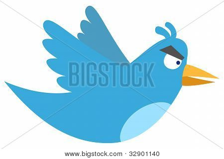 Isolated angry blue bird on white background poster