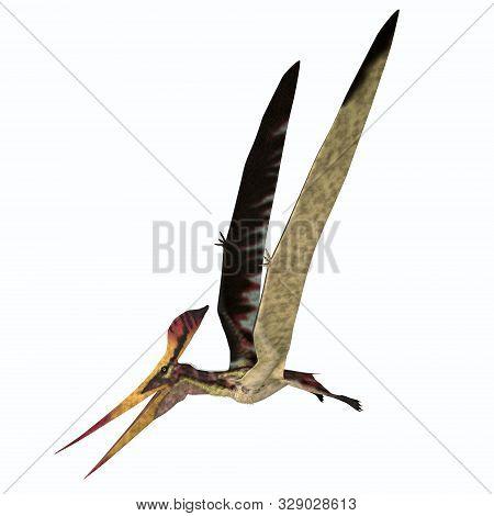 Pteranodon Longiceps Flight 3d Illustration - Pteranodon Was A Carnivorous Pterosaur Bird Of Prey Th