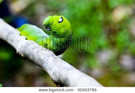 tiny green worm