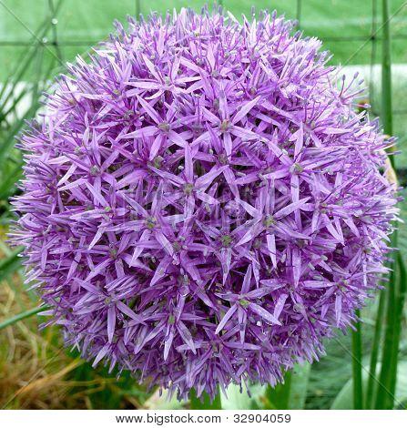 pretty round flower