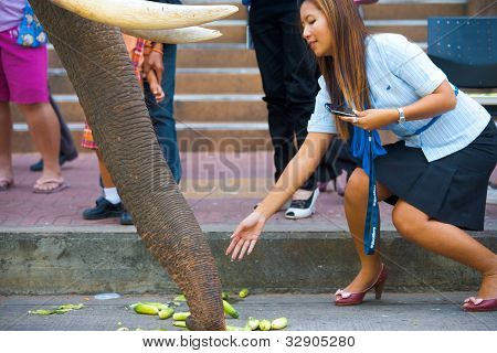 Beautiful Woman Feeding Elephant Trunk