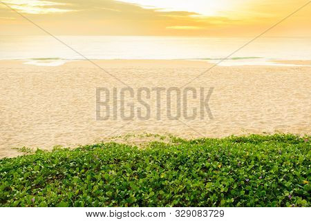 Landscape View And  Sand Pattern On A Beach And Beach Morning Glory Plant At Sunset Time, Phuket Pro