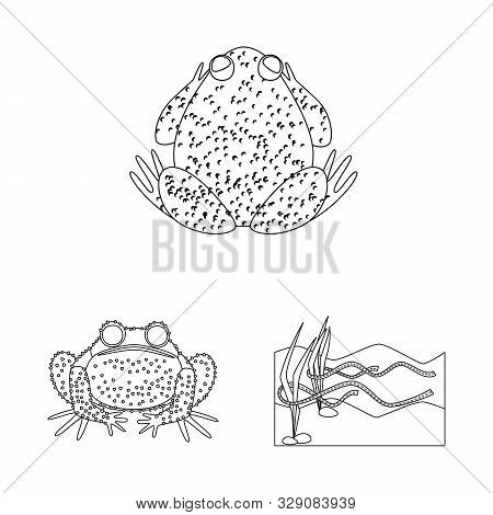 Vector Design Of Amphibian And Animal Symbol. Set Of Amphibian And Nature Stock Symbol For Web.