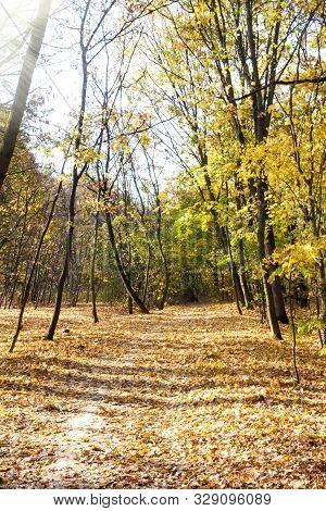 Autumn Landscape. Walkway In The Deciduous  Forest On An Autumn Sunny Day. Lysa Hora, Kiev, Ukraine,