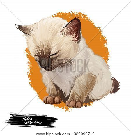 Mekong Bobtail Kitten Digital Art Illustration. Sleeping Catty Watercolor Portrait. Cute Face Of Fur