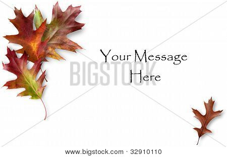 Oak Leaf Card
