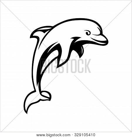Dolphins Jump Into The Sea With A White Background