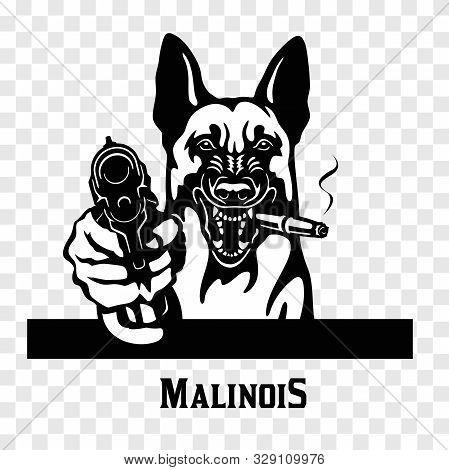 Malinois With Guns - Malinois Gangster. Head Of Angry Malinois