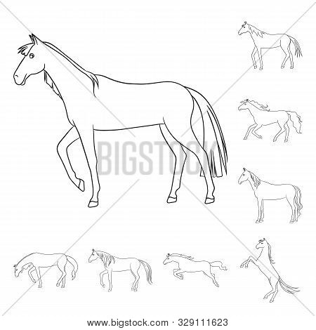 Isolated Object Of Stallion And Galloping Symbol. Set Of Stallion And Riding Stock Vector Illustrati